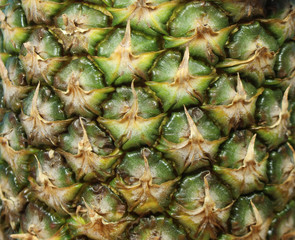 Pineapple fruit/ This is a detail of pineapple fruit.