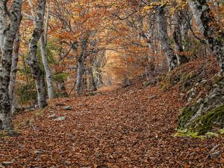Bosque y otoño / Fall in autumn