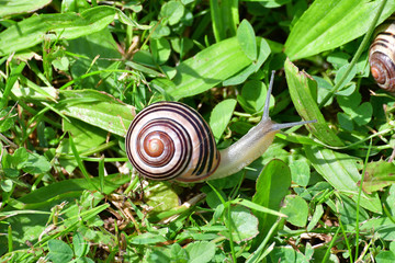 hrd of snails walking on the grass
