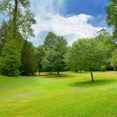 Fototapete - Beautiful meadow covered with grass in the park