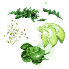 Salad ingredients. Watercolor Illustration.