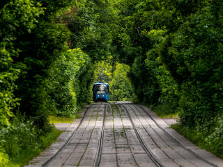 The tram goes through dense thickets of trees. The path through the tunnel. Summer landscape in the Park with the tram. Russia. Moscow. Sokolniki Park.