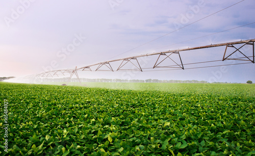 Automated farming irrigation system  Agricultural concept