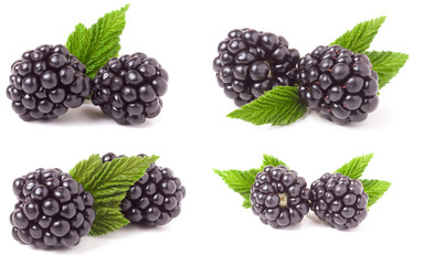 blackberry with leaves isolated on white background. Set or collection