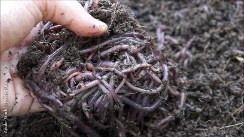 Role of earthworms in soil fertility