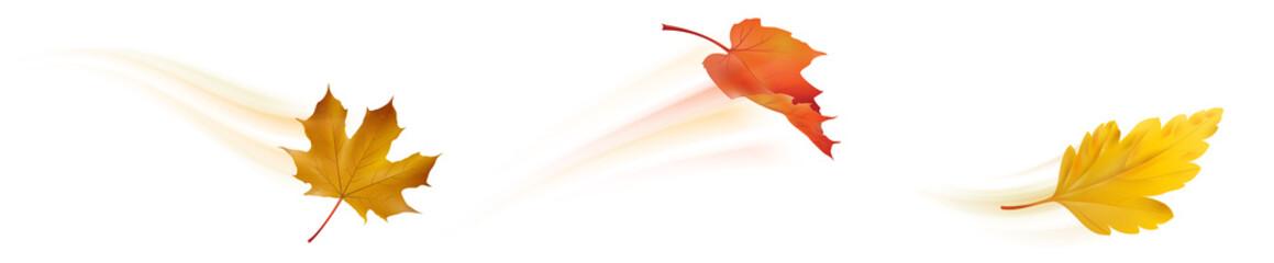 Herbstlaub im Wind - Blätter Set mit Bewegungsunschärfe Fototapete