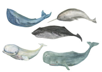 Watercolor painting whale family