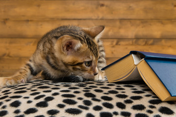 young kitten sits and looks under the closed old book