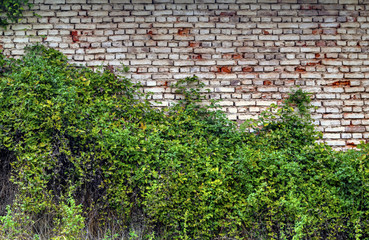 Stylish brick wall background and fresh green flora