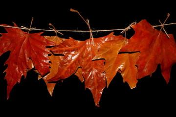 красивые осенние листья весят на веревки на черном фоне