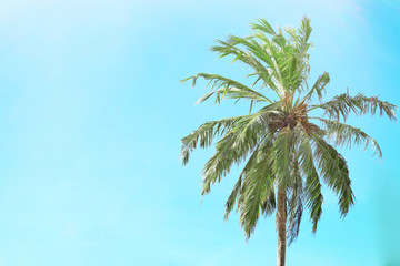 View of beautiful tropical palm against blue sky