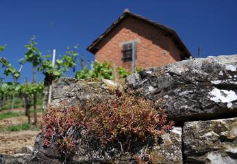 Schutzhütte im Weinberg