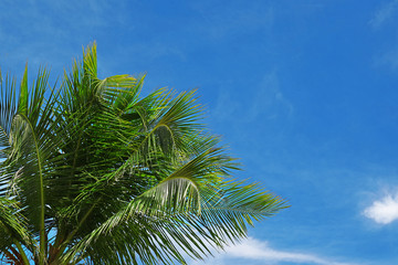 Green palm against blue sky at tropical resort