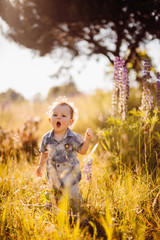 Little boy walks on the field of lavander covered with sunshine