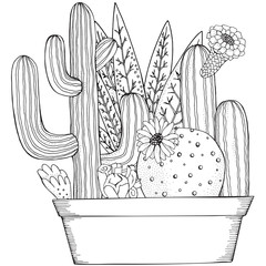 Hand drawn set of succulents and cactus in pots. Doodles elements. Black and white. Coloring book page for adult. Linear botanical vector.