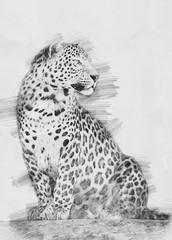 Leopard sketch