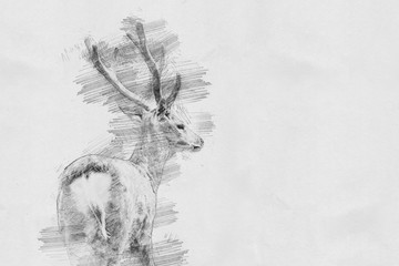 Deer. Sketch with pencil
