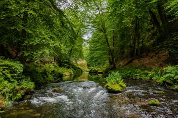 River in the forest, Bohemian Switzerland National Park, Czech Republic