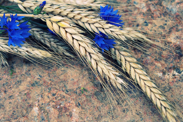 Ripe ears of wheat with blue cornflowers on a stone background