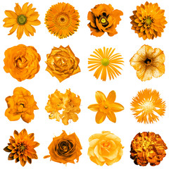 Mix collage of natural and surreal orange flowers 16 in 1: peony, dahlia, primula, aster, daisy, rose, gerbera, clove, chrysanthemum, cornflower, flax, pelargonium isolated on white