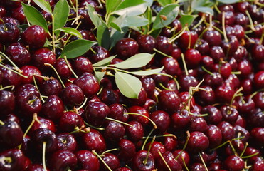 red cherry bulk for sale in market