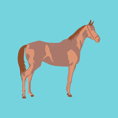 Vector illustration in flat style horse