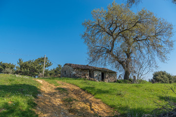 Old country stone house under big tree