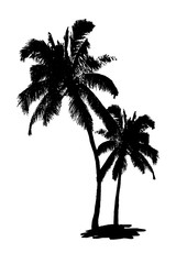 Black palm tree silhouettes on isolated white background