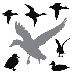 Vector duck silhouettes collection