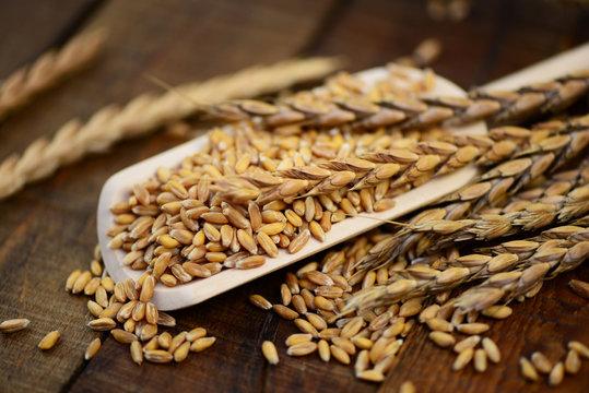 Dinkel,Getreide,Körner