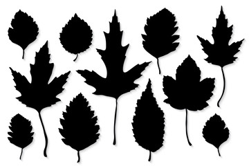 Leaves silhouette set on white background vector