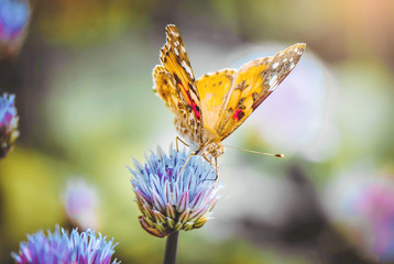 Butterfly on a flower. Selective focus.