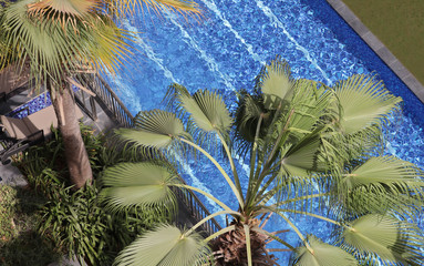 Palm leaves trees against blue swimming pool, summer holiday, vacation postcard concept