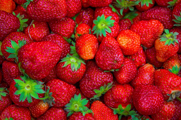many large, bright, juicy, beautiful strawberries.