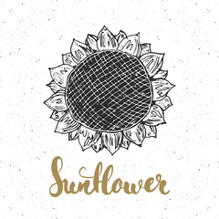 Sunflower sketch with lettering, Vintage label, Hand drawn grunge textured badge, retro logo template, typography design vector illustration