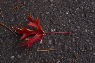 Red leaf against concrete