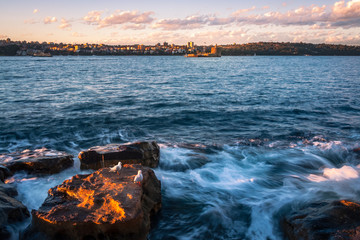 Seagulls taking shelter from the waves on the rocks in Sydney Harbour, Australia at sunset