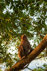 monkey in tropical Park of China, Hainan island