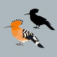 bird hoopoe vector illustration style flat silhouette set
