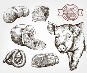 The head of a pig. Natural meat products. Animal husbandry. Set of vector sketches against gray