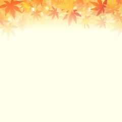 秋のイメージ 輝く紅葉と落ち葉