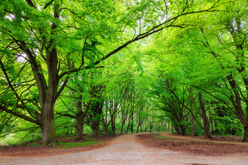 Beautiful green trees in spring in the Amsterdam forest (Amsterdamse bos)