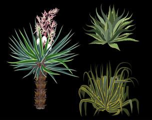 three desert plant isolated on black