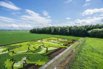 Beautiful Rice Field Art Landscape, Hokkaido