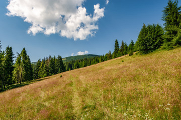 Conifer forest in classic Carpathian mountain Landscape