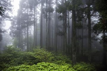 比叡山 風景