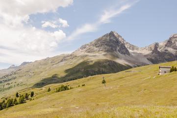 St. Moritz, Alpen, Engadin, Oberengadin, Julierpass, Piz Julier, Suvretta, Alm, Sommer, Wanderweg, Signalbahn, Graubünden, Schweiz