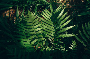 Green fern leaves with the same color as the film camera. This image has a retro feel because it uses film tones.