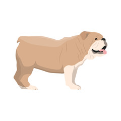 Vector illustration of Bulldog