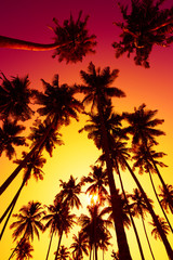 Palm trees silhouettes at vivid tropical sunset